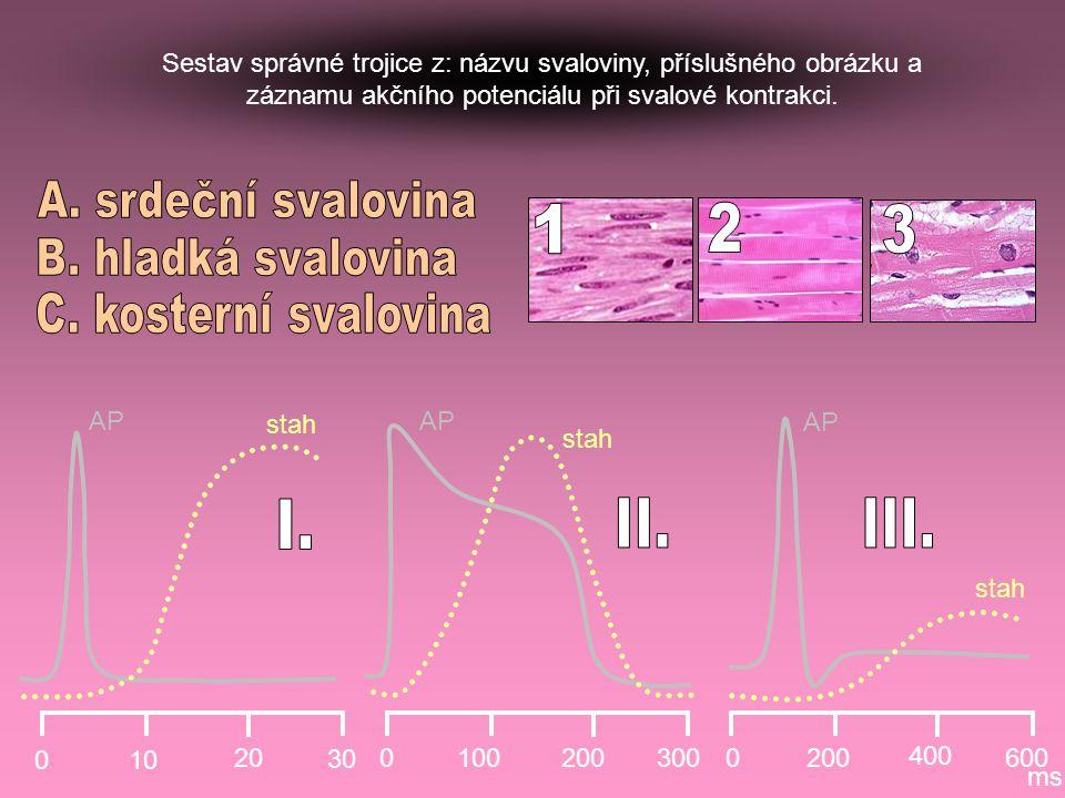 A. srdeční svalovina 1 2 3 B. hladká svalovina C. kosterní svalovina