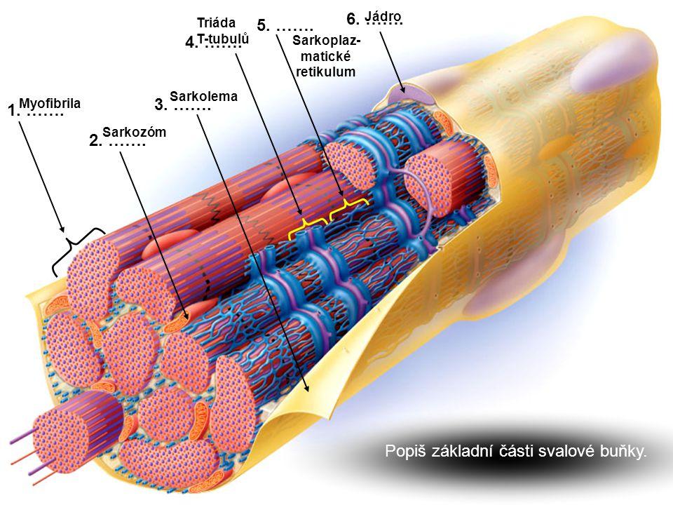 Sarkoplaz-matické retikulum
