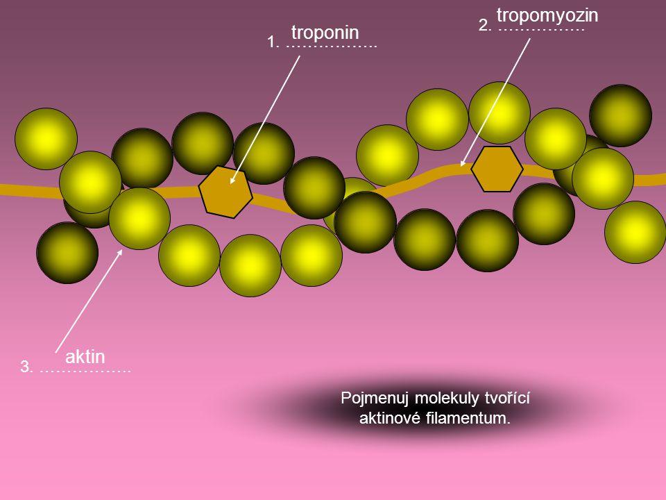 Pojmenuj molekuly tvořící aktinové filamentum.