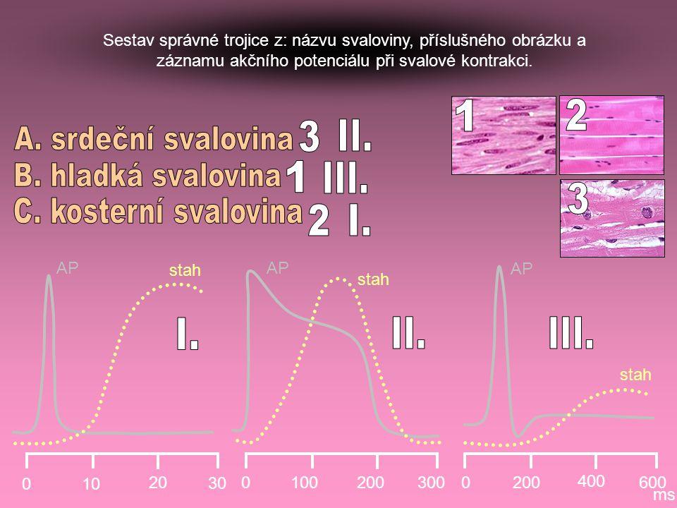 1 2 3 II. A. srdeční svalovina B. hladká svalovina 1 III. 3