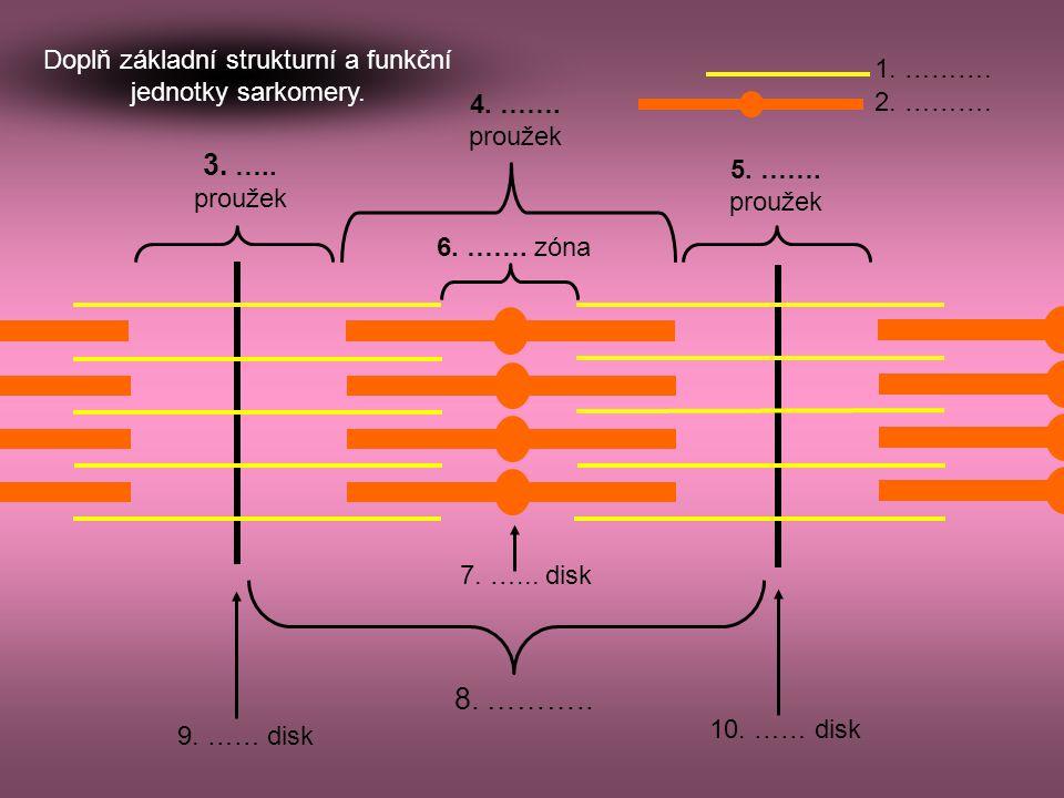 Doplň základní strukturní a funkční jednotky sarkomery.