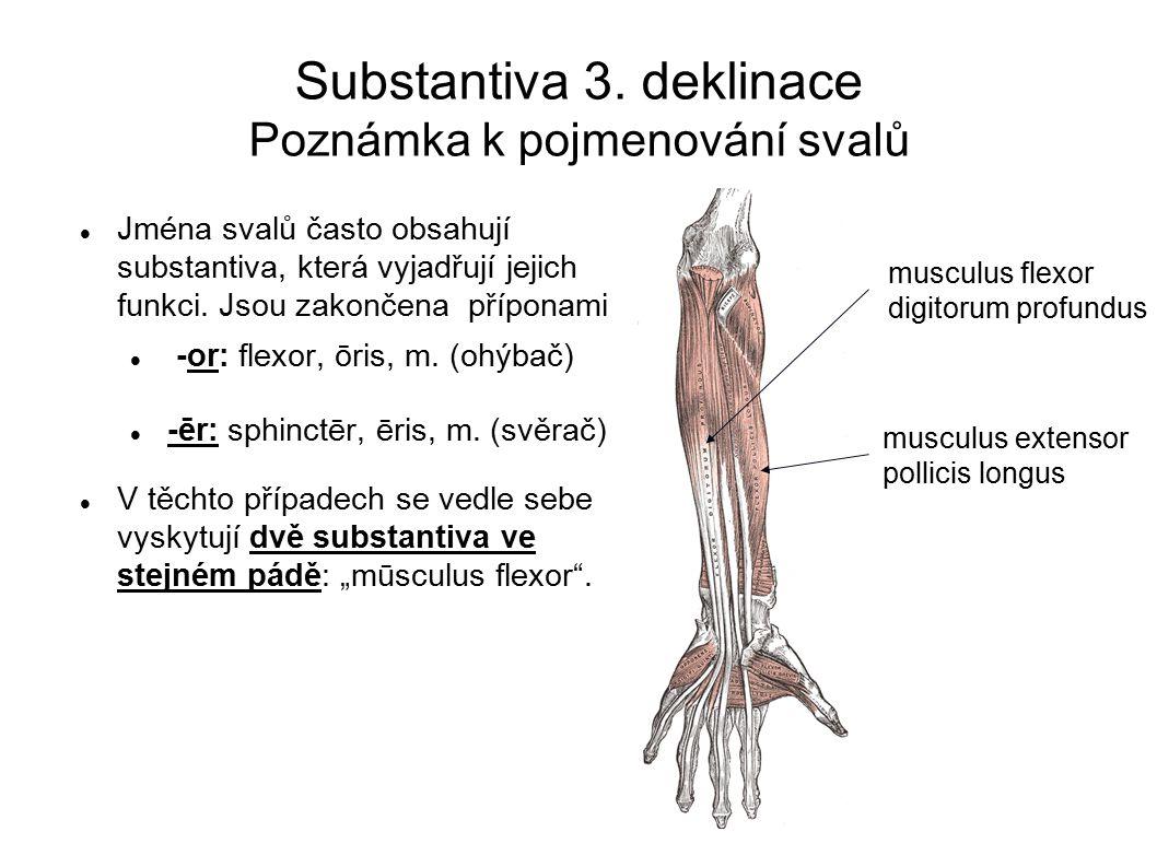 Substantiva 3. deklinace Poznámka k pojmenování svalů