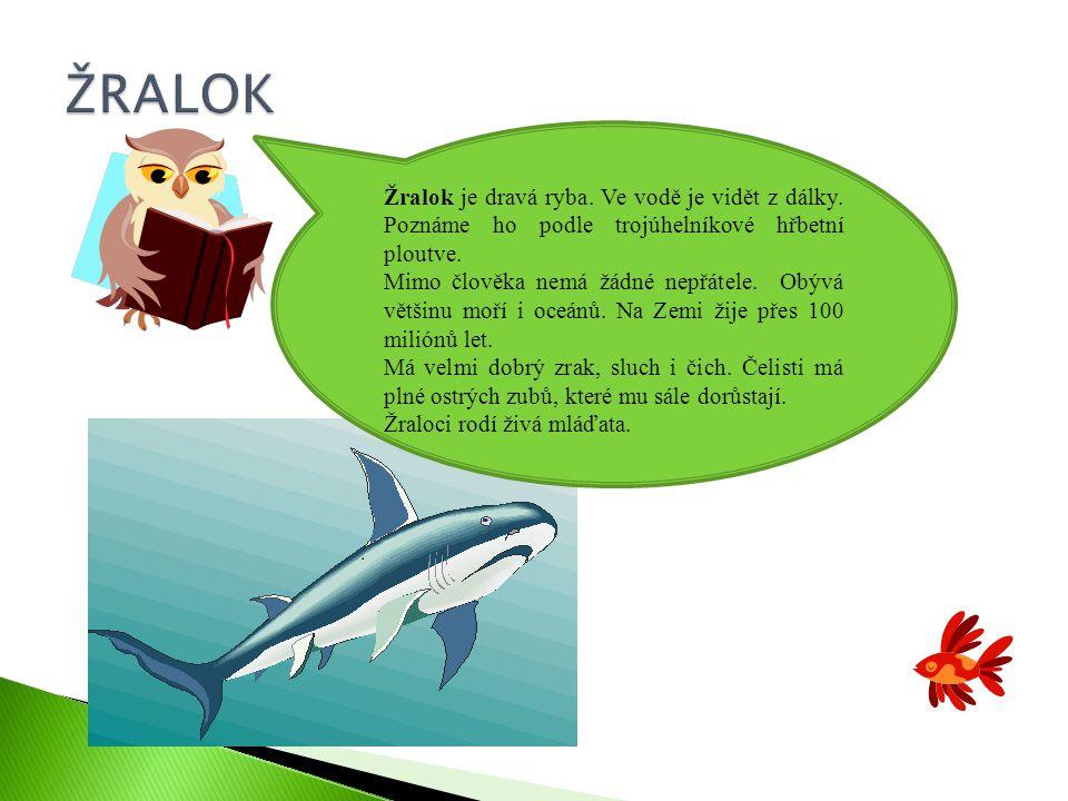 ŽRALOK Žralok je dravá ryba. Ve vodě je vidět z dálky. Poznáme ho podle trojúhelníkové hřbetní ploutve.