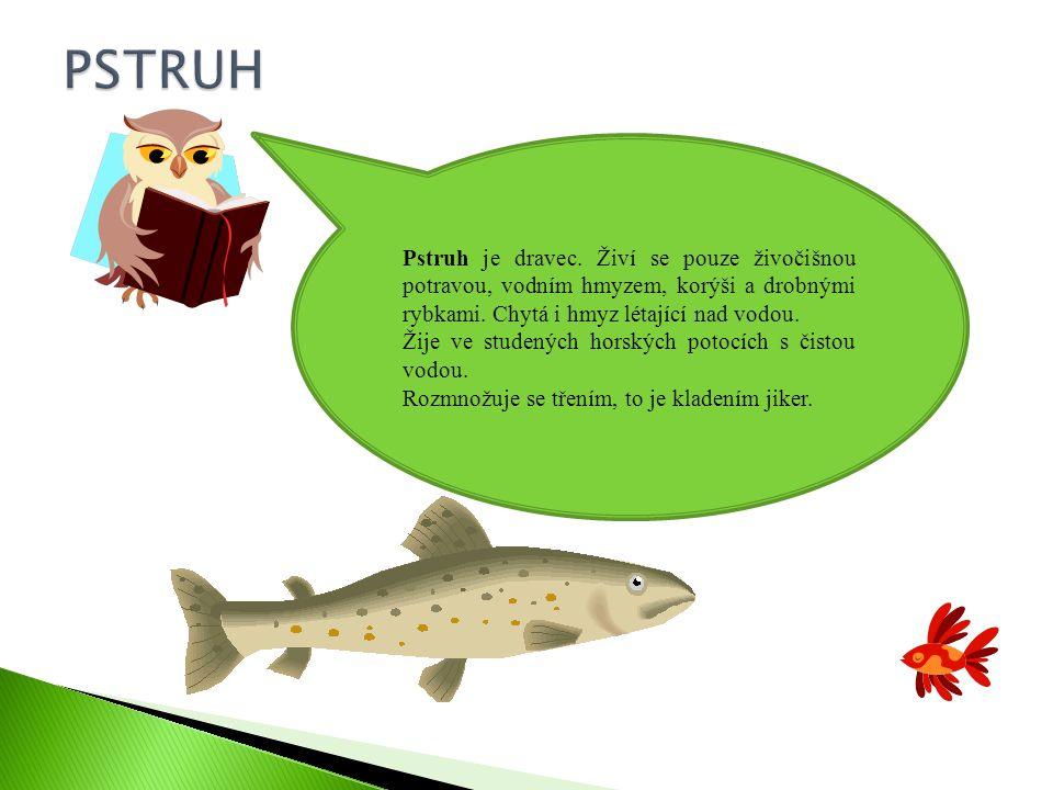 PSTRUH Pstruh je dravec. Živí se pouze živočišnou potravou, vodním hmyzem, korýši a drobnými rybkami. Chytá i hmyz létající nad vodou.