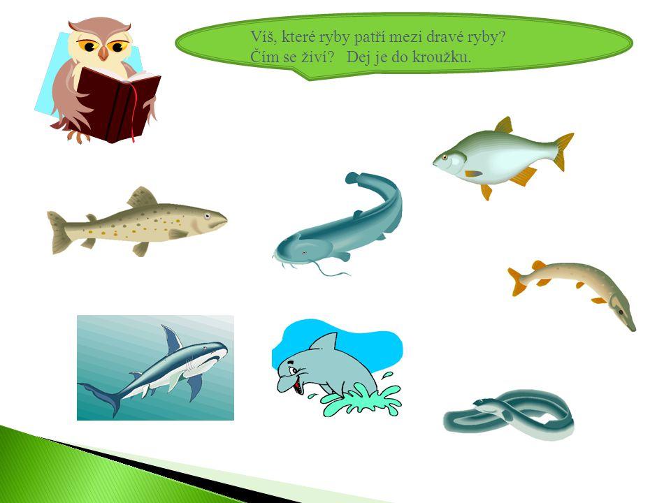 Víš, které ryby patří mezi dravé ryby