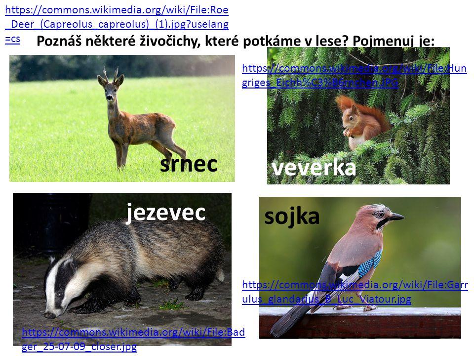srnec veverka jezevec sojka