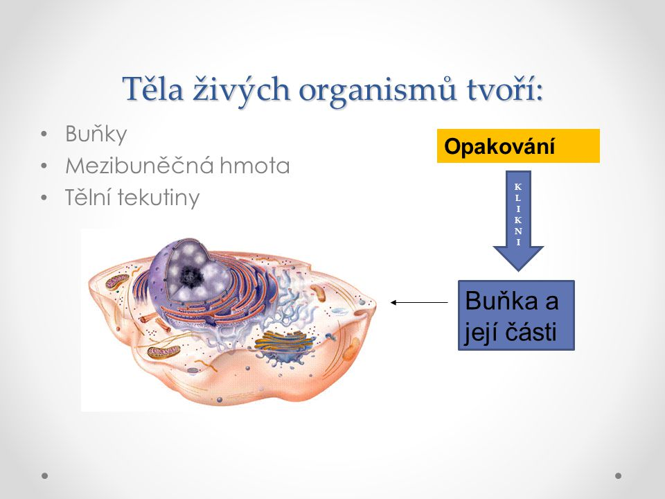 Těla živých organismů tvoří:
