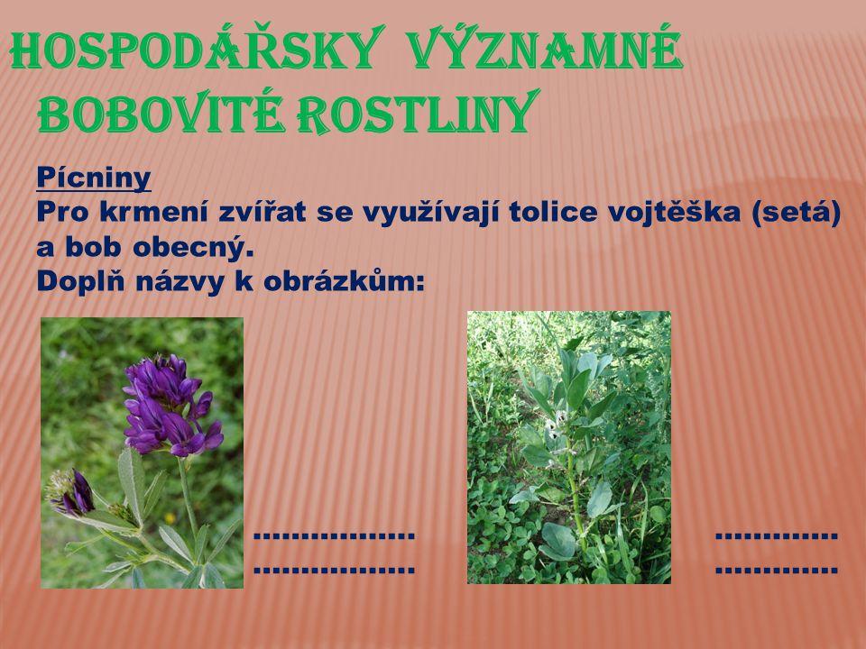 HospodáŘsky významné bobovité rostliny Pícniny