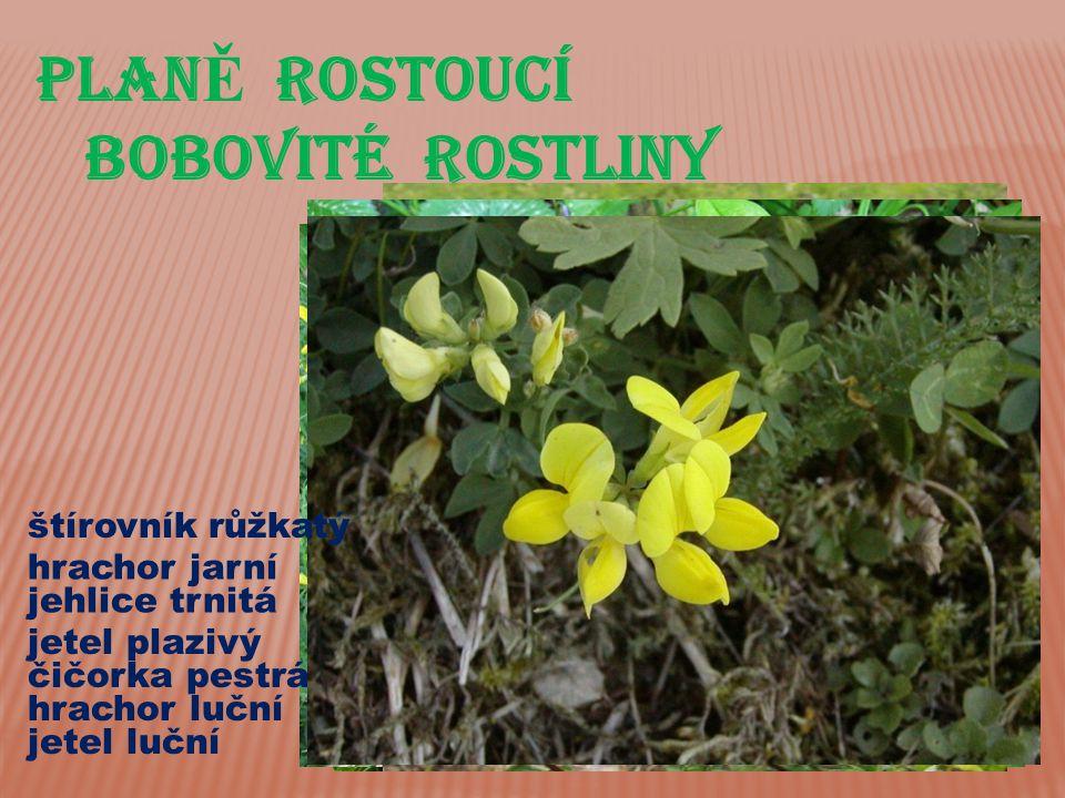 PLANĚ ROSTOUCÍ BOBOVITÉ ROSTLINY štírovník růžkatý hrachor jarní