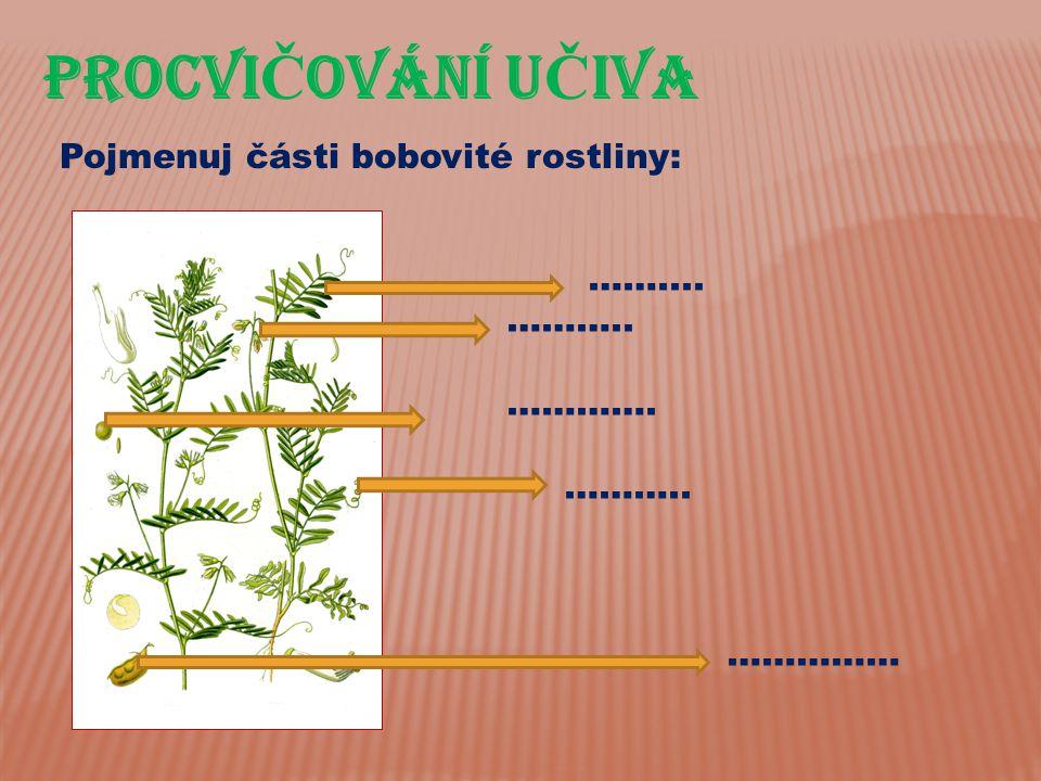 PROCVIČOVÁnÍ UČIVA Pojmenuj části bobovité rostliny: …….... ………..