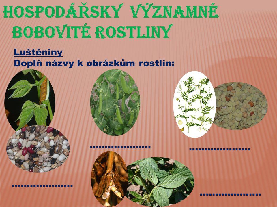 HospodáŘsky významné bobovité rostliny Luštěniny