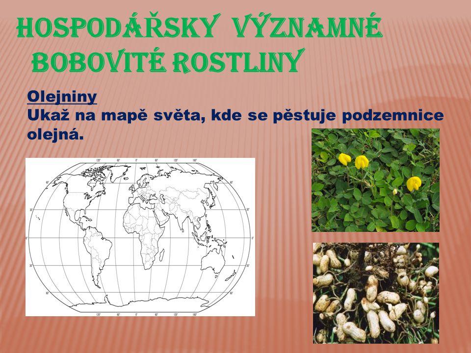 HospodáŘsky významné bobovité rostliny Olejniny
