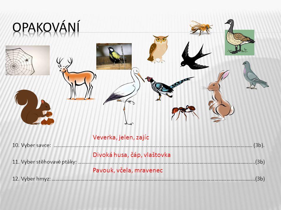 opakování Veverka, jelen, zajíc Divoká husa, čáp, vlaštovka