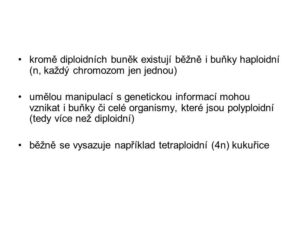 kromě diploidních buněk existují běžně i buňky haploidní (n, každý chromozom jen jednou)