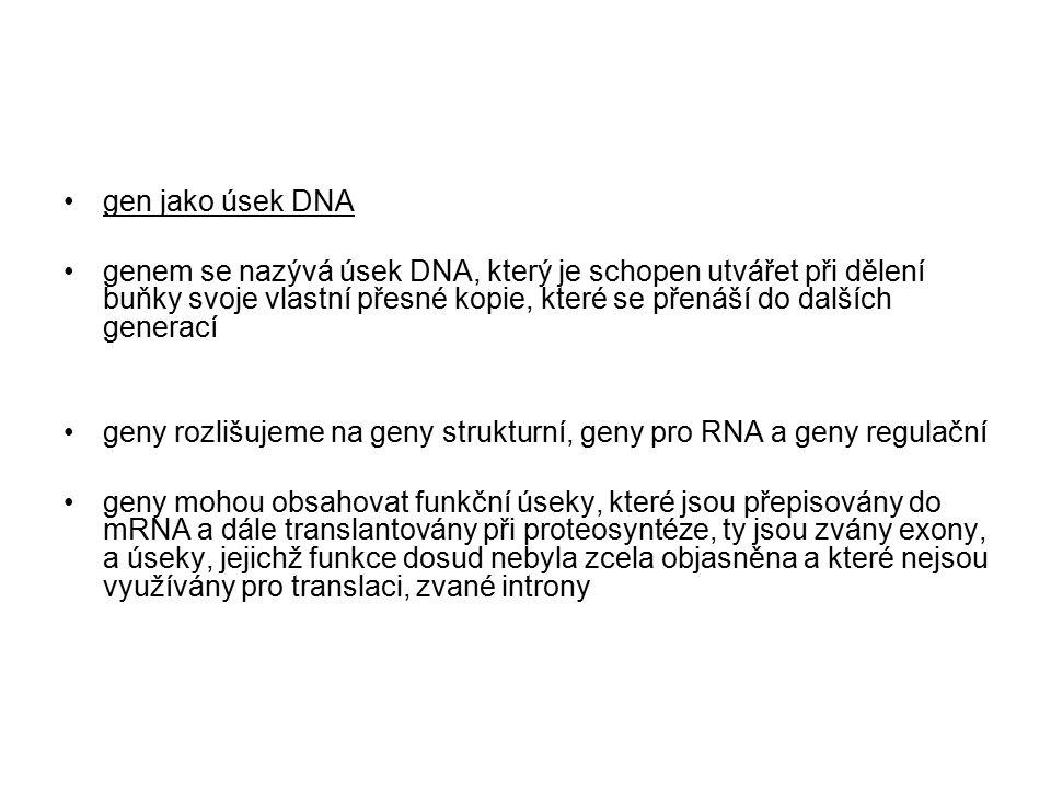 gen jako úsek DNA