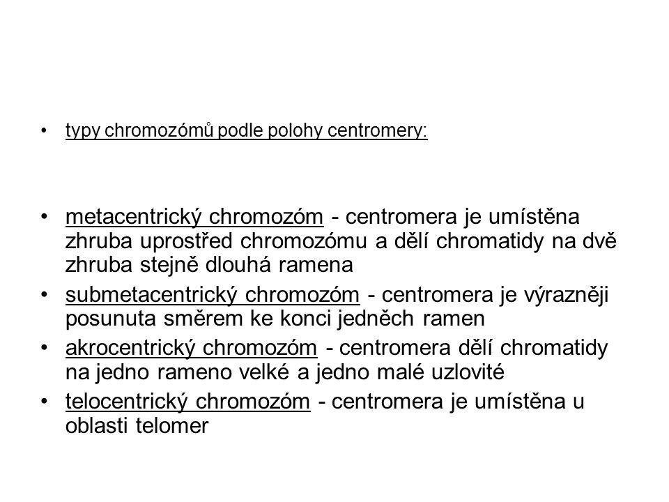telocentrický chromozóm - centromera je umístěna u oblasti telomer