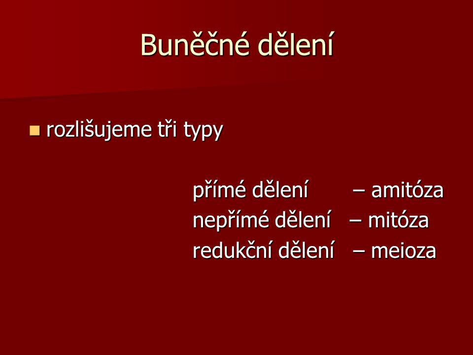 Buněčné dělení rozlišujeme tři typy přímé dělení – amitóza