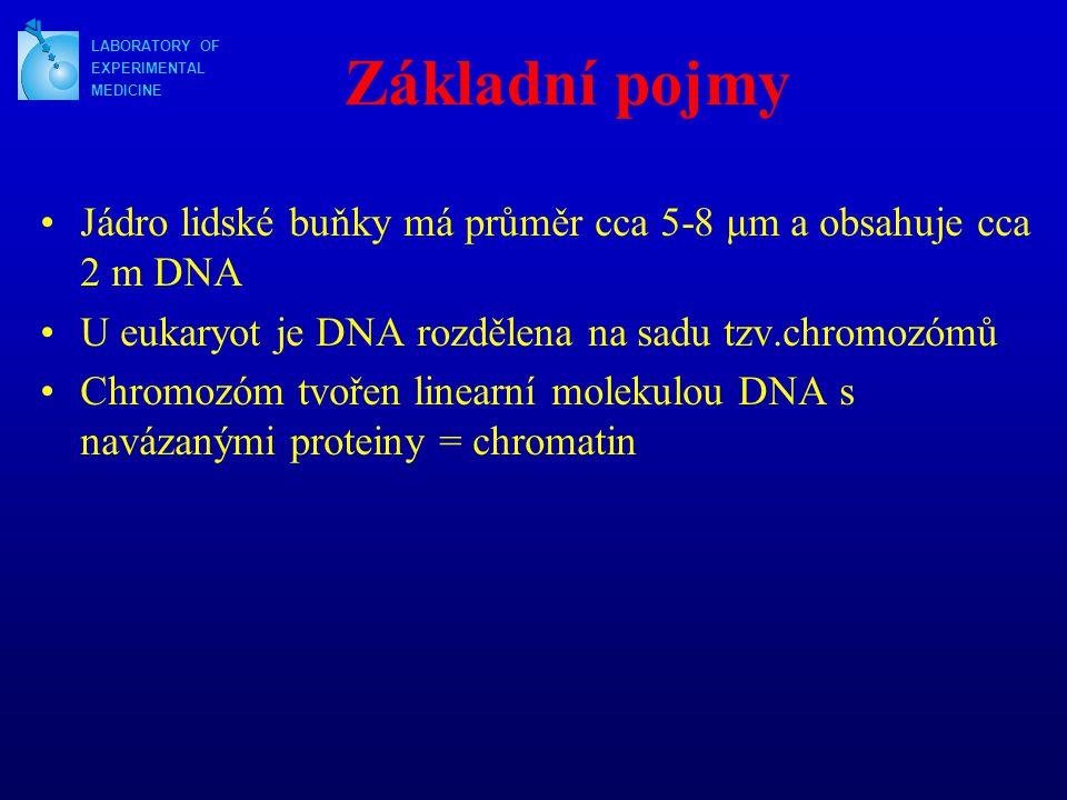Základní pojmy LABORATORY OF. EXPERIMENTAL. MEDICINE. Jádro lidské buňky má průměr cca 5-8 μm a obsahuje cca 2 m DNA.