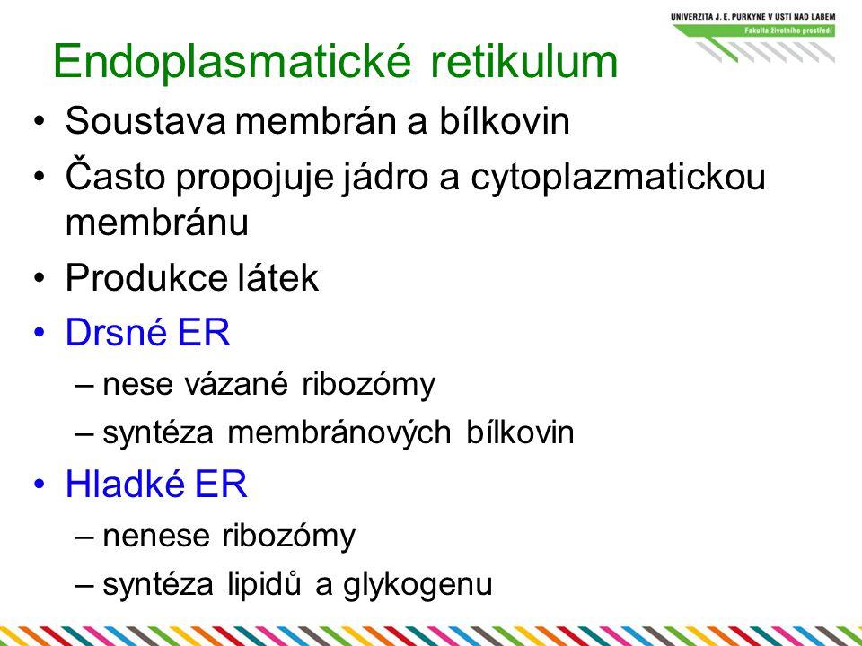 Endoplasmatické retikulum