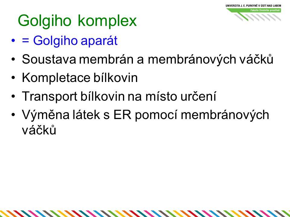 Golgiho komplex = Golgiho aparát Soustava membrán a membránových váčků