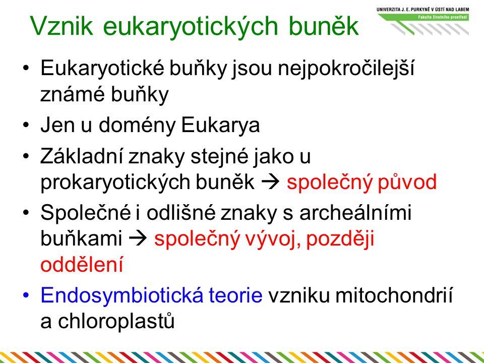 Vznik eukaryotických buněk