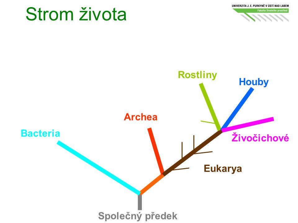 Strom života Rostliny Houby Archea Bacteria Živočichové Eukarya