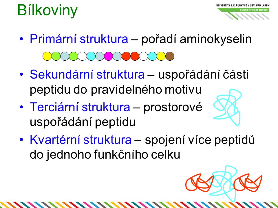 Bílkoviny Primární struktura – pořadí aminokyselin