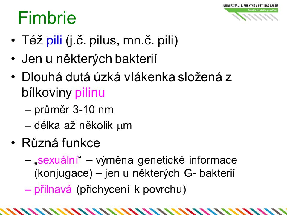 Fimbrie Též pili (j.č. pilus, mn.č. pili) Jen u některých bakterií