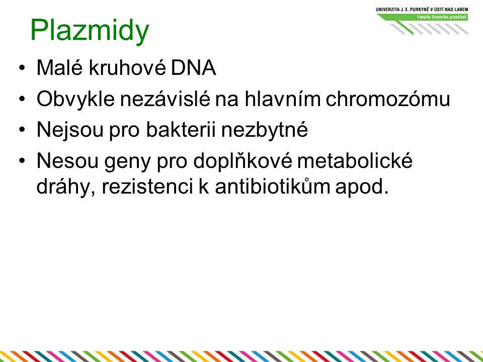 Plazmidy Malé kruhové DNA Obvykle nezávislé na hlavním chromozómu
