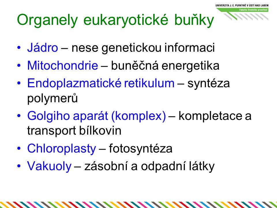 Organely eukaryotické buňky