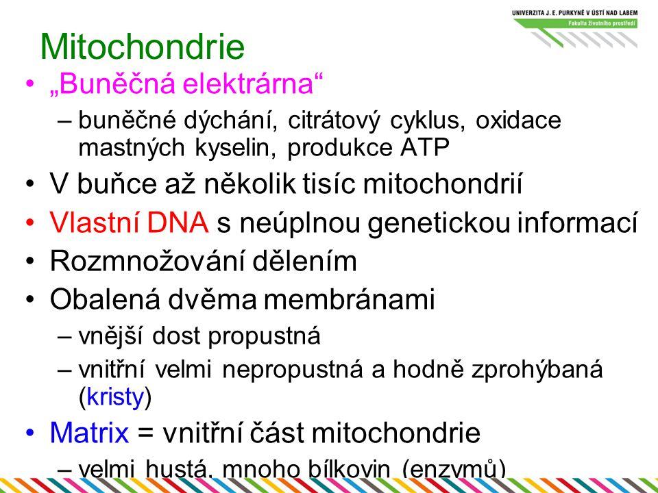 """Mitochondrie """"Buněčná elektrárna"""