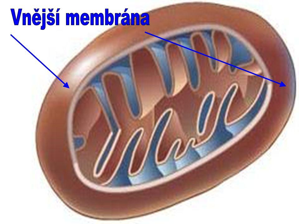 Vnější membrána