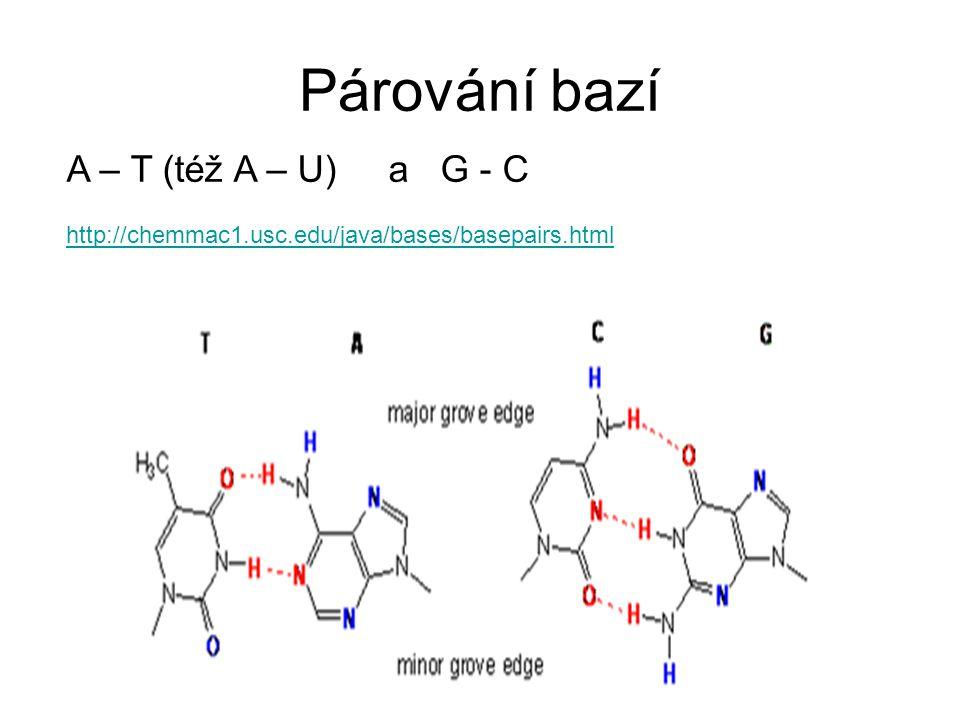 Párování bazí A – T (též A – U) a G - C