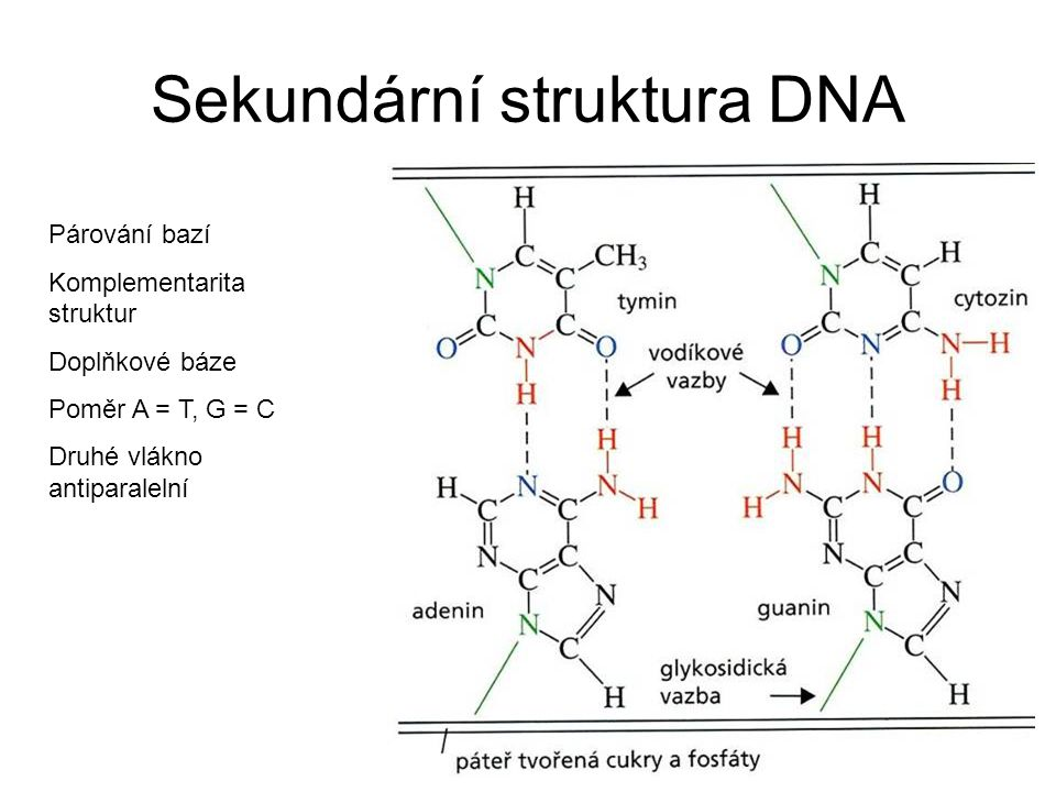 Sekundární struktura DNA