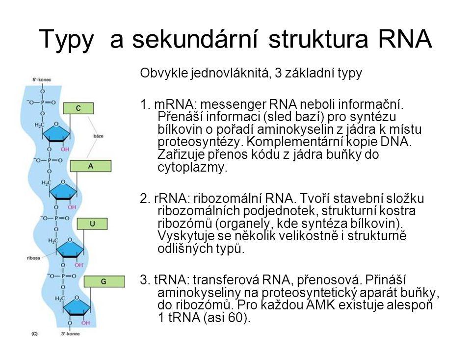 Typy a sekundární struktura RNA
