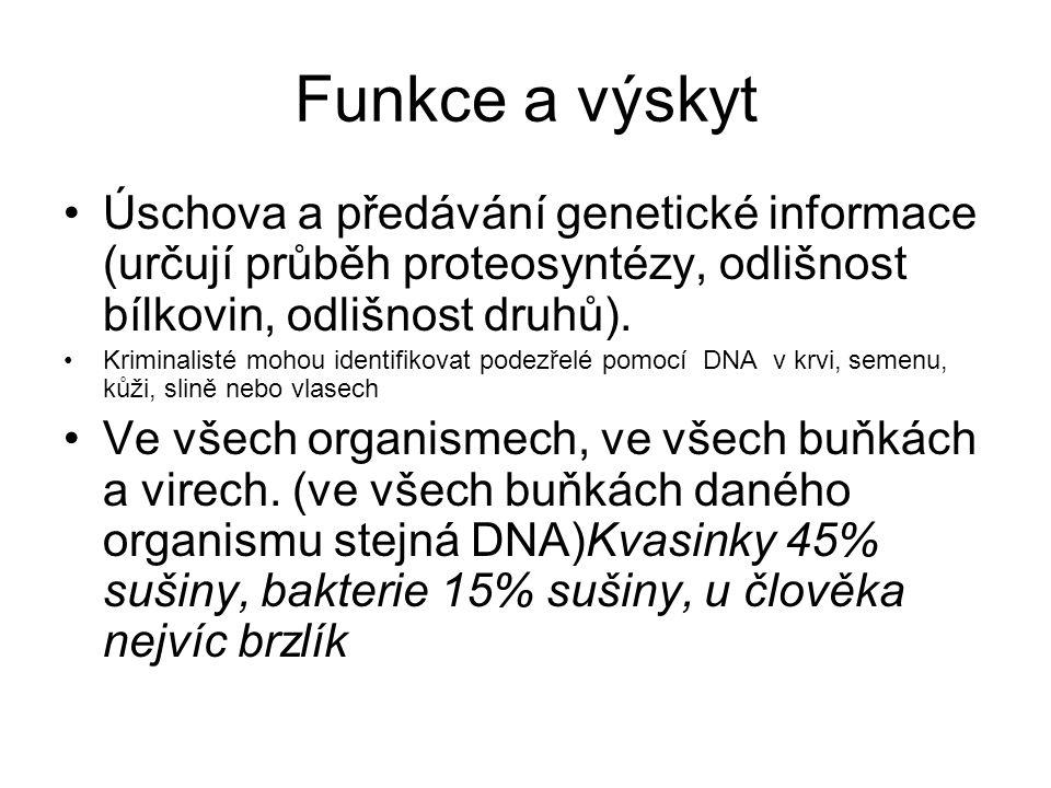 Funkce a výskyt Úschova a předávání genetické informace (určují průběh proteosyntézy, odlišnost bílkovin, odlišnost druhů).