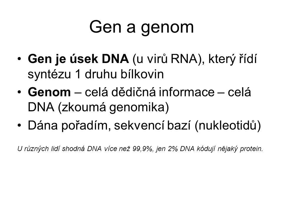 Gen a genom Gen je úsek DNA (u virů RNA), který řídí syntézu 1 druhu bílkovin. Genom – celá dědičná informace – celá DNA (zkoumá genomika)
