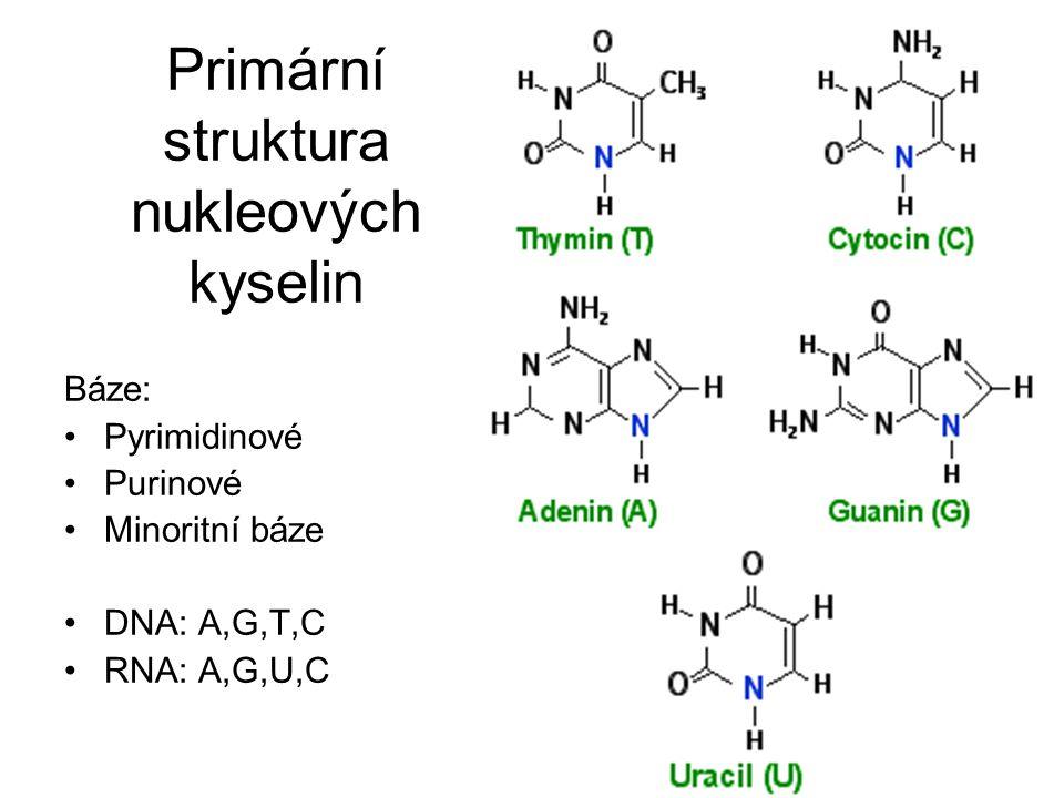 Primární struktura nukleových kyselin