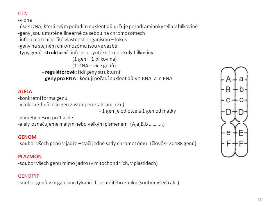 GEN -vloha. úsek DNA, která svým pořadím nukleotidů určuje pořadí aminokyselin v bílkovině. geny jsou umístěné lineárně za sebou na chromozomech.