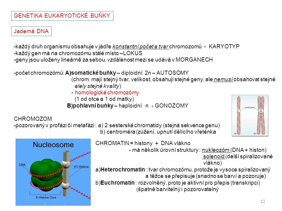GENETIKA EUKARYOTICKÉ BUŇKY
