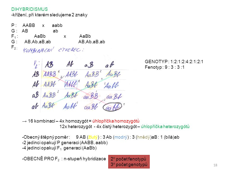 DIHYBRIDISMUS -křížení, při kterém sledujeme 2 znaky. P : AABB x aabb. G : AB ab.