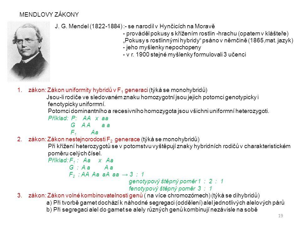 MENDLOVY ZÁKONY J. G. Mendel (1822-1884) :- se narodil v Hynčicích na Moravě. - prováděl pokusy s křížením rostlin -hrachu (opatem v klášteře)