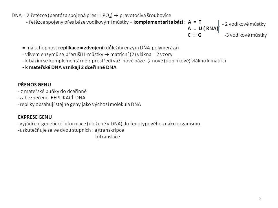 DNA = 2 řetězce (pentóza spojená přes H3PO4) → pravotočivá šroubovice