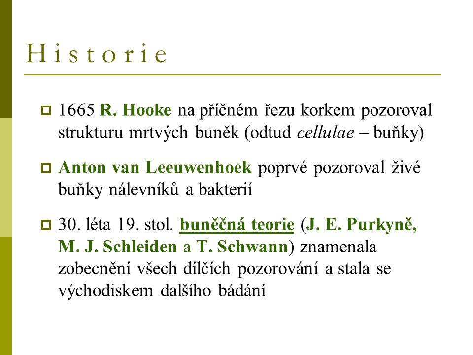 H i s t o r i e 1665 R. Hooke na příčném řezu korkem pozoroval strukturu mrtvých buněk (odtud cellulae – buňky)