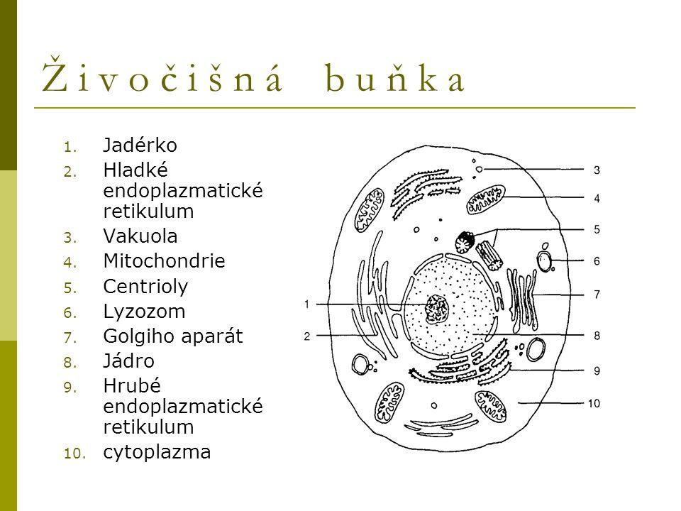 Ž i v o č i š n á b u ň k a Jadérko Hladké endoplazmatické retikulum
