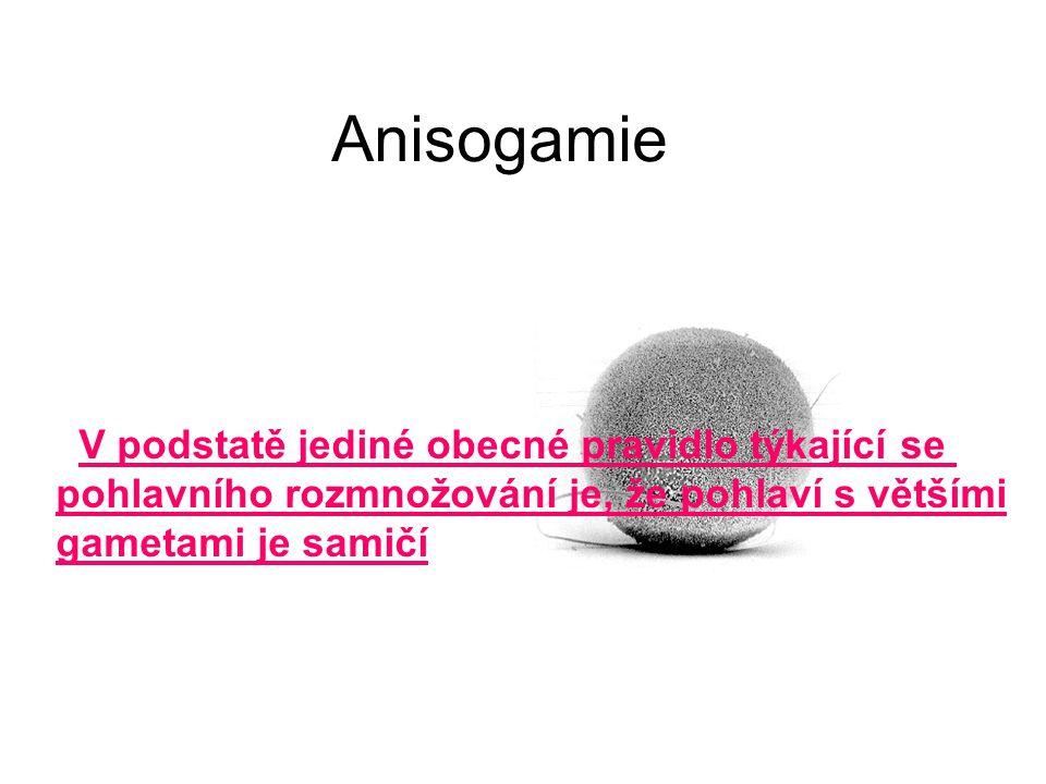Anisogamie V podstatě jediné obecné pravidlo týkající se