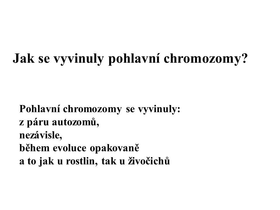 Jak se vyvinuly pohlavní chromozomy