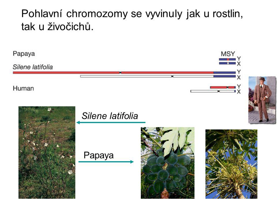 Pohlavní chromozomy se vyvinuly jak u rostlin, tak u živočichů.