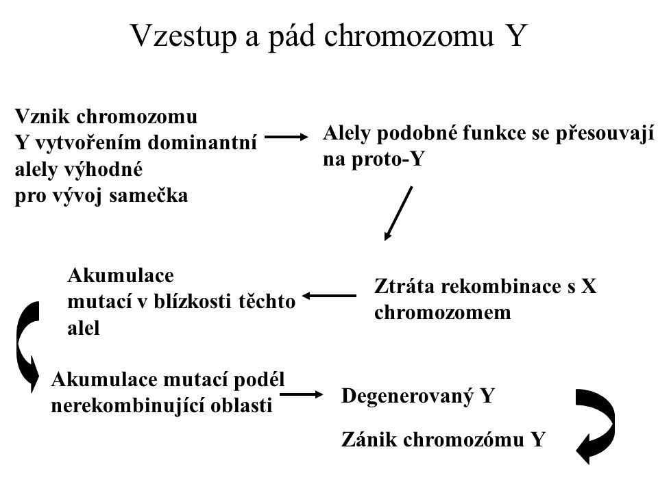 Vzestup a pád chromozomu Y