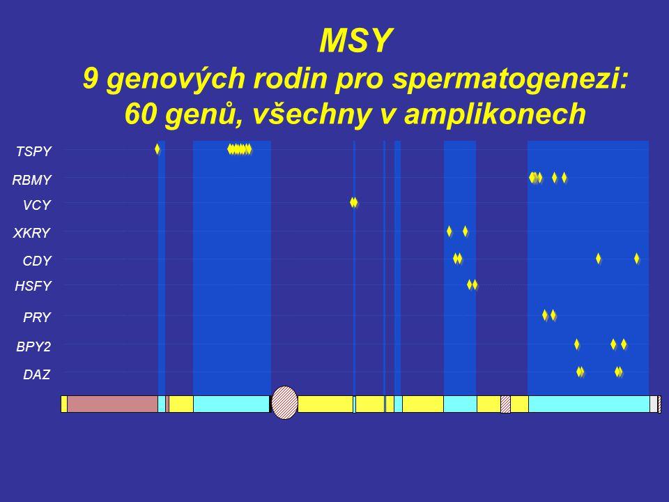9 genových rodin pro spermatogenezi: 60 genů, všechny v amplikonech